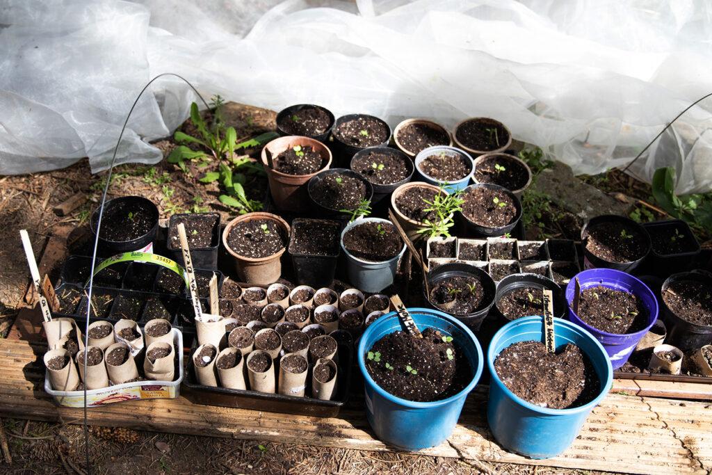 Jungpflanzen der Gemüseheldinnenn