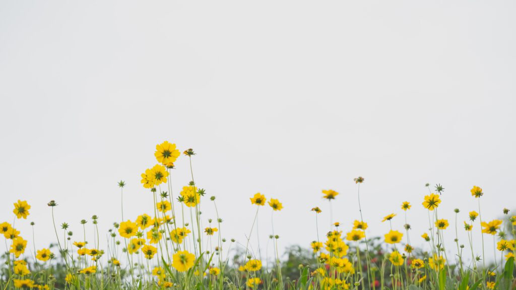 Ein Blumenfeld als Symbol für die Slowflower-Bewegung